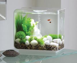 Acrylic Tank